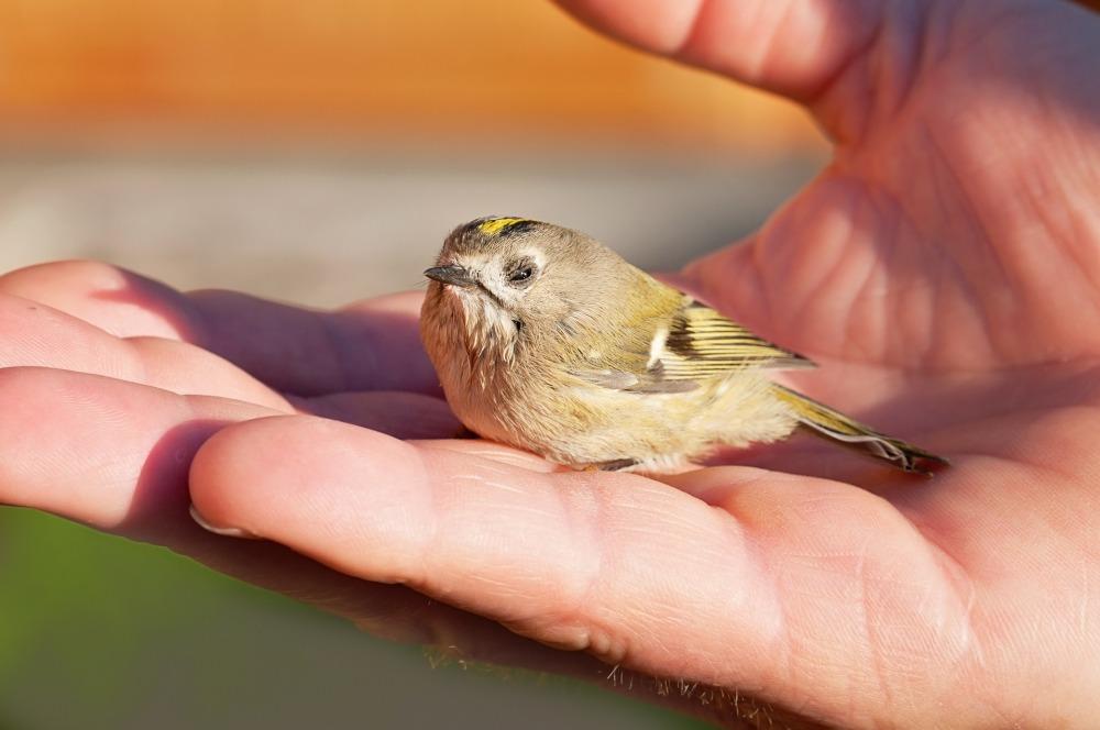 bird-1040944_1920.jpg